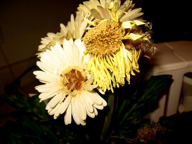 dyingflower