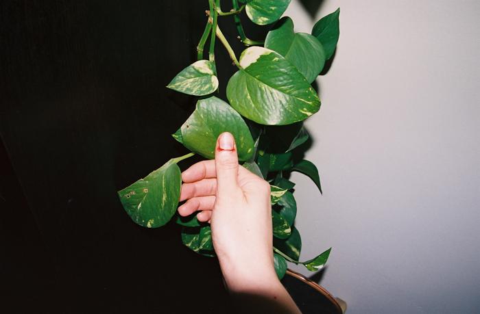 thumbandplant
