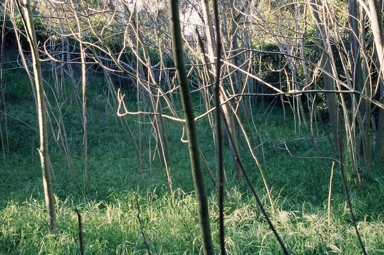 wiretrees